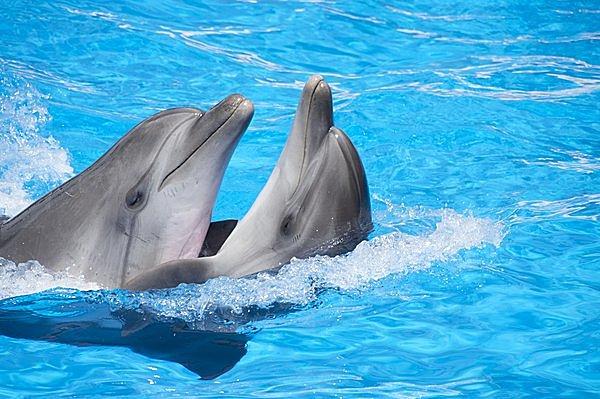 イルカの画像 p1_40