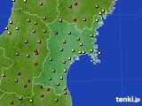 宮城県のアメダス実況(気温)(2017年05月21日)