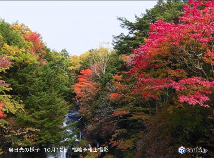 山で葉が色づく