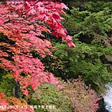 秋深まる 関東北部の山間部では「紅葉」進む