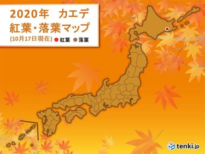 釧路でカエデが紅葉 この秋 全国で初