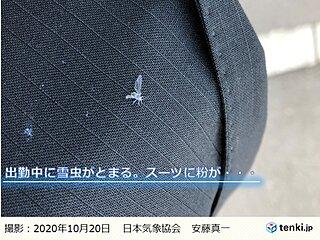北海道 雪虫の初雪予想が当たる?