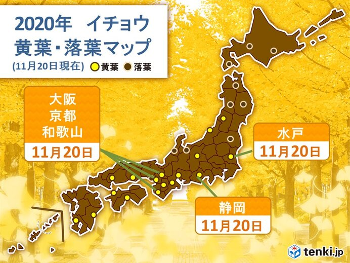 水戸 関東地方でいち早くイチョウ黄葉 大阪や静岡も