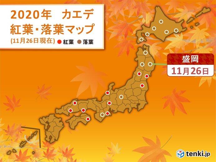 東京でイチョウが黄葉 盛岡でカエデが落葉