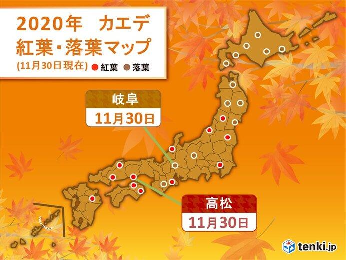 高松でカエデの紅葉 京都などではイチョウの落葉も 季節は次第に冬へ
