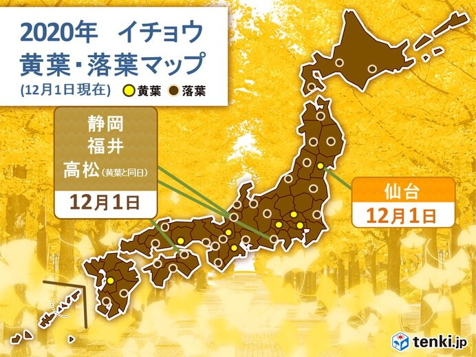 大阪でカエデが紅葉