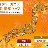 大阪でカエデが紅葉 木々の冬支度進み 落葉も