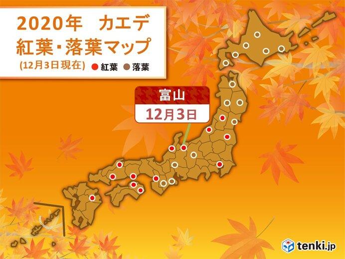 カエデ 富山で紅葉