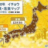 福岡でイチョウが黄葉 富山でカエデが紅葉