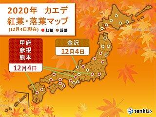 甲府や彦根、熊本でカエデが紅葉 九州も紅葉進む