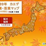 福井と福岡でカエデが紅葉 平年より10日以上遅い観測
