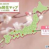 東京で梅開花 平年より8日早く 今シーズン関東でトップ