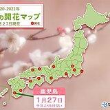 鹿児島で梅の開花 九州は3月中旬から下旬並みの暖かさ