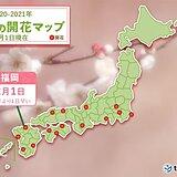 九州から春の便り続々 福岡で梅開花、名瀬でヒカンザクラ満開に