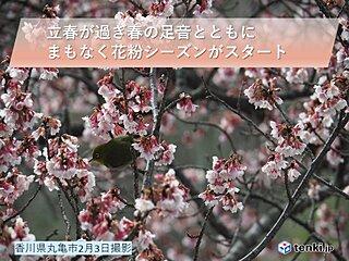 四国地方 そろそろスギ花粉シーズンに