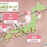 春の便り 続々と埋まる梅の開花マップ 今日5日は津・神戸で梅開花