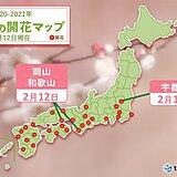 福岡市や松山市は4月上旬並みの気温 続々とウメ開花