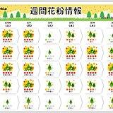 スギ花粉 西日本に加え 東海や関東もピークに 「非常に多く」飛ぶ日は?