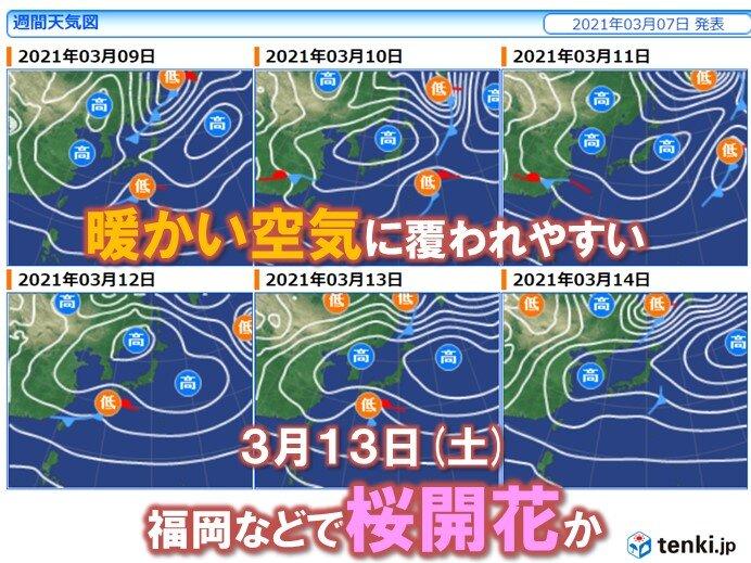 あすは20℃予想も 次の週末には福岡など桜開花か 東京は15日の予想