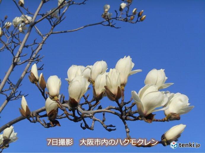 関西 春の草花の生長が進む一週間に