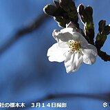 東京で桜が開花 統計開始以来 1位タイ