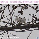 中国地方 きょう(11日)広島の桜が記録的なスピード開花に
