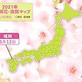 福岡で桜が開花 統計開始以来 最も早く