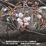 福岡 観測史上最早で桜開花 九州の桜、続々と開花へ