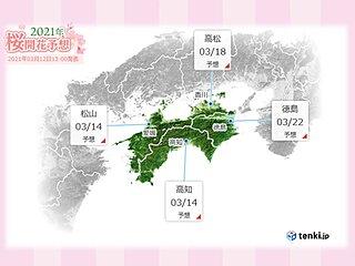 愛媛県宇和島市で桜開花 松山市や高知市もまもなく開花の予想
