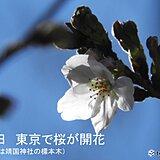 東京で桜が開花 スギ花粉のピークそろそろ終盤? 都心でヒノキが飛散開始