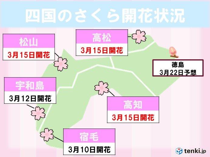 高松・松山・高知で記録的に早い桜の開花!