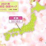 京都で桜開花 統計開始以来最も早く 今年の桜の開花なぜ早い?