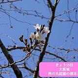 関西 大阪でさくら開花 満開はいつごろ?