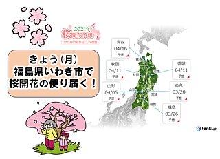 桜前線は早くも東北へ 福島県いわき市で桜開花の便り届く