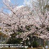 九州 福岡で桜満開 花冷え あす23日朝は遅霜に注意