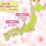 富山・神戸で桜開花 富山は統計開始以来最も早い