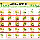 今年の花粉対策はいつまで? この先1週間「非常に多い」予想 4月もヒノキがピーク
