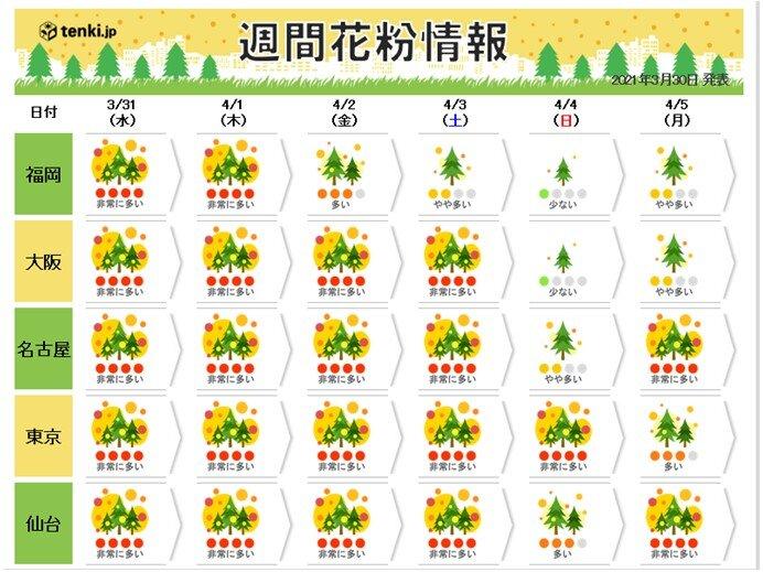 花粉しばらく非常に多い予想 日曜日~月曜日は雨でも万全な対策が必要な所も