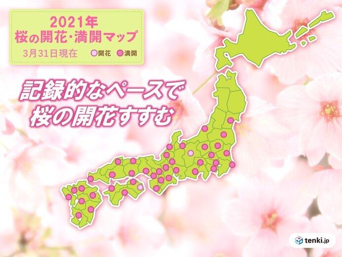 暖かかった3月 記録的なペースで桜の開花進む 春の嵐で太平洋側は大雨も