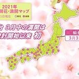 仙台で桜満開 3月中の満開は統計開始以来初めて