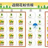 花粉 広範囲で「非常に多い」 暖かさと雨あがりは好条件