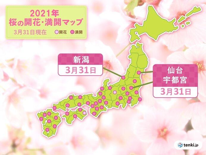 桜の開花も進む
