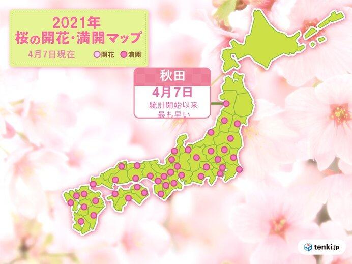 桜前線は依然として急ピッチで北上中 秋田で最も早い満開