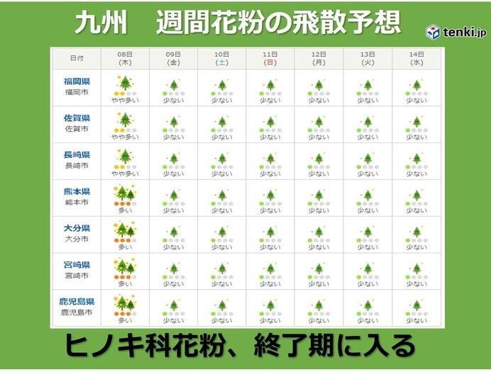 九州 ヒノキ科の花粉終了期に入る