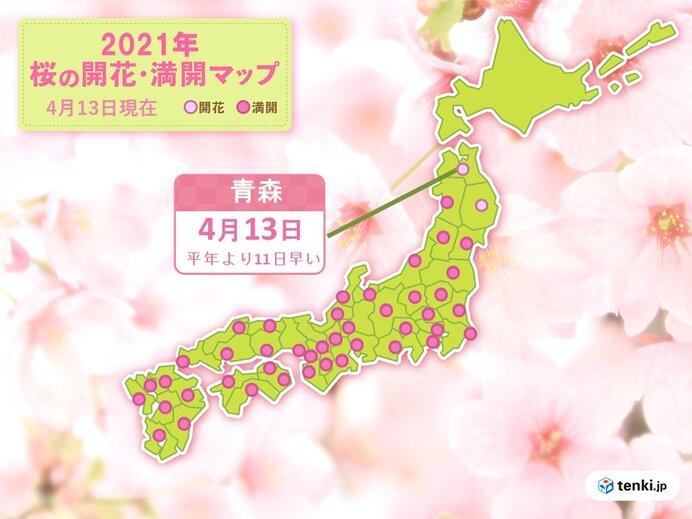 青森で桜開花 統計開始以来もっとも早く ウメも平年より早い開花