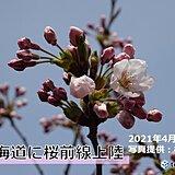 桜前線 史上最も早く北海道へ