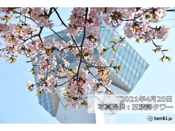 青森の開花から一週間で函館へ