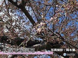 札幌で桜開花 統計史上2番目に早い