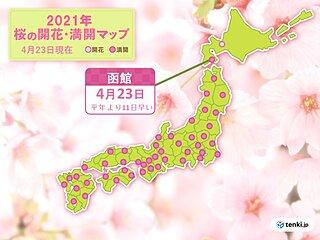 函館で桜満開 統計開始以来2番目の早さ 北海道の気象官署で今年初めて