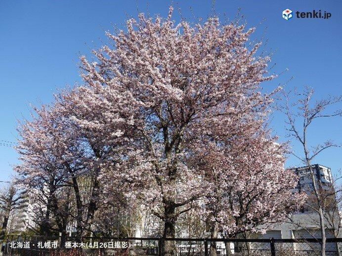 札幌の標本木